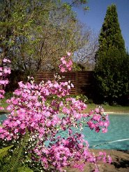 Holiday Rentals & Accommodation - Self Catering - South Africa - Johannesburg - Randburg