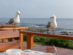 Holiday Rentals & Accommodation - Beachfront Accommodation - South Africa - Overberg - Gansbaai