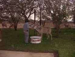 Bosveld Akkommodasie te huur in Malelane, Southern Kruger Park, South Africa