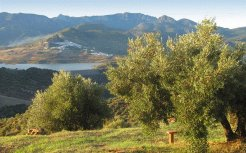 Holiday Rentals & Accommodation - Self Catering - Spain - Andalucia - Algodonales