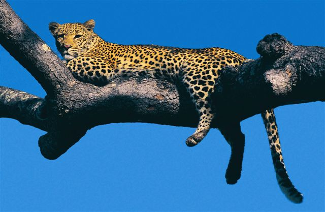 Holiday Rentals & Accommodation - Game Reserves - South Africa - Thornybush Game Reserve - Hoedspruit