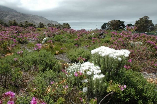 Konferensie Plekke te huur in Pringle Bay, Overberg, South Africa